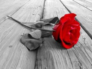 Dediche con Rosa Rossa