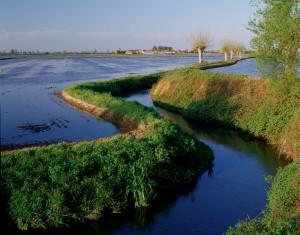 Un canale irriguo che porta l'acqua alle risaie nella pianura tra Piemonte e Lombardia