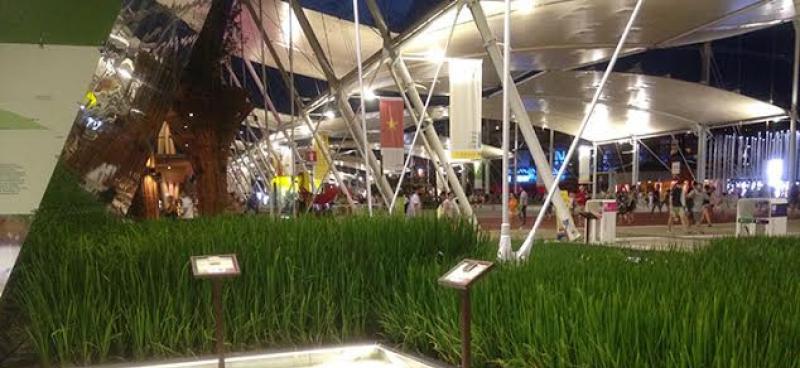 La ricostruzione di una risaia all'interno di Expo 2015